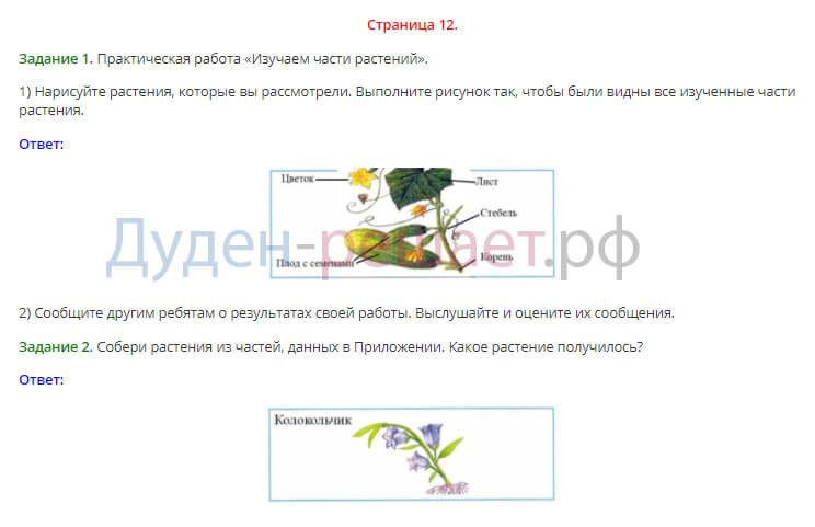 Окружающий мир 1 класс рабочая тетрадь Плешаков 1 часть страница 12